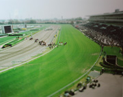 The horse race , Chiba