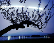 no. 040507 (Mt.Fuji, an ume tree and a moon trial) SS