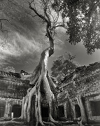 Rilke's Bayon (from ANCIENT TREES: PORTRAITS OF TIME)